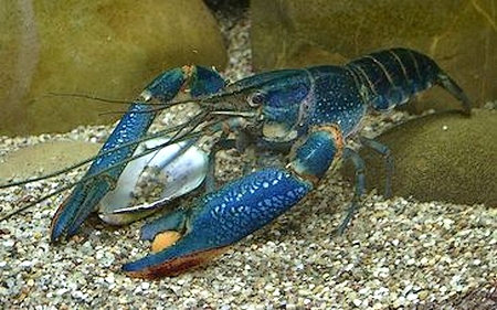 Chaky Aquaristik